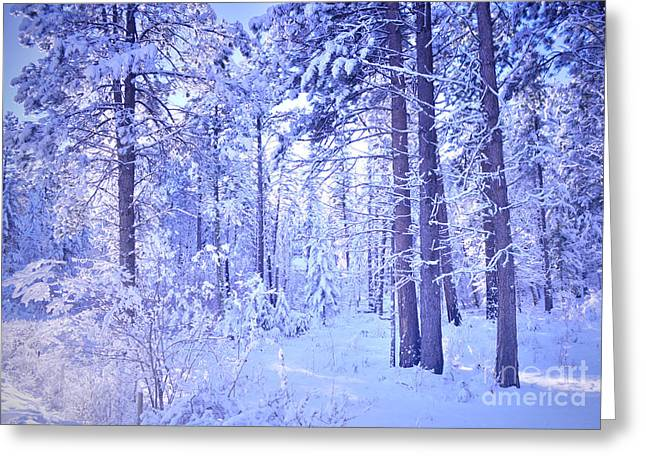 Coldness Greeting Cards - Winter Solace Greeting Card by Tara Turner