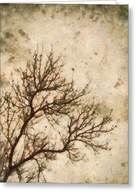 Winter Trees Mixed Media Greeting Cards - Winter Solitude Greeting Card by Dan Sproul