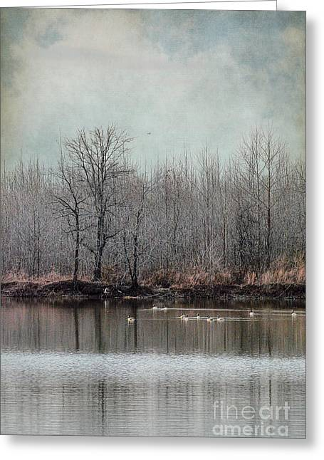 Flock Of Geese Greeting Cards - Winter Solitude Greeting Card by Jai Johnson
