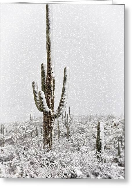 Winter Sonoran Style  Greeting Card by Saija  Lehtonen