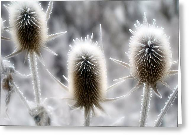 Snow Scene Digital Greeting Cards - Winter Spikes Greeting Card by Gothicolors Donna Snyder