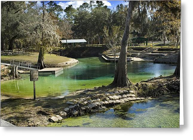 Harts Greeting Cards - Winter Springs Greeting Card by Stacey Lynn Payne