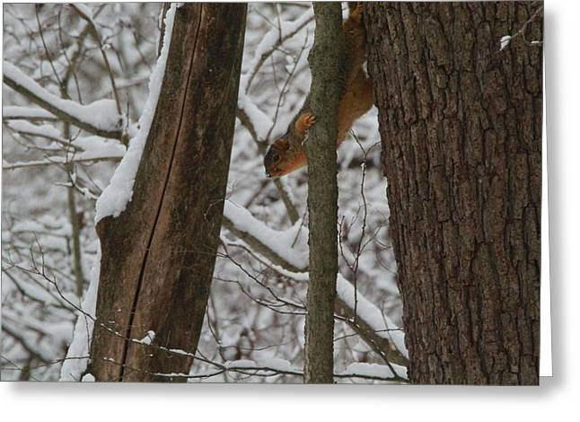 Squirrel Greeting Cards - Winter Squirrel Greeting Card by Dan Sproul