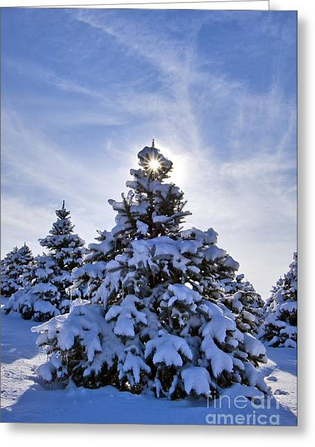 Indiana Christmas Greeting Cards - Winter Starburst - D008347 Greeting Card by Daniel Dempster