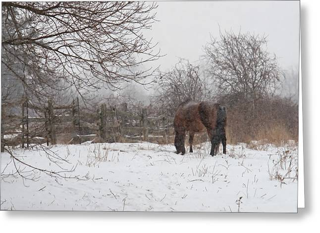 Jim Nelson Greeting Cards - Winter Storm Greeting Card by Jim Nelson
