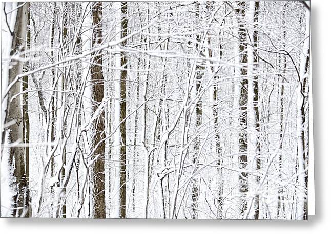 Bare Trees Greeting Cards - Winter Storm Greeting Card by Laurent Lucuix
