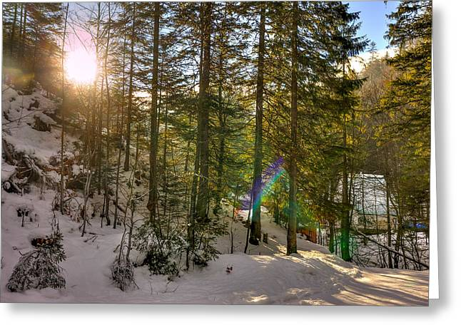 Wintry Greeting Cards - Winter Sun Flares Greeting Card by Pati Photography