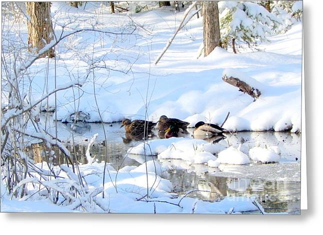 Annapolis Valley Greeting Cards - Winter sun Greeting Card by Karen Cook