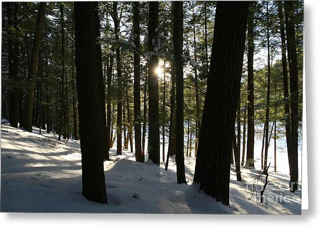 Union Connecticut Greeting Cards - Winter Sun  Greeting Card by Neal  Eslinger