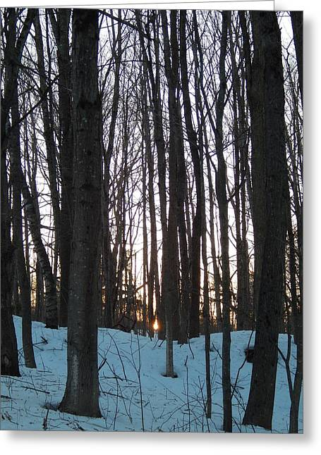 Winter In Maine Greeting Cards - Winter sun sets in the Maine woods Greeting Card by Expressionistar Priscilla-Batzell