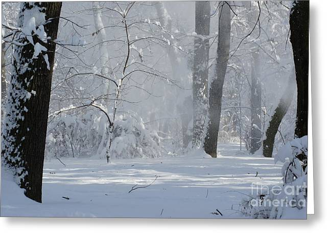 print Photographs Greeting Cards - Winter Sunny Day Greeting Card by Dan Marinescu
