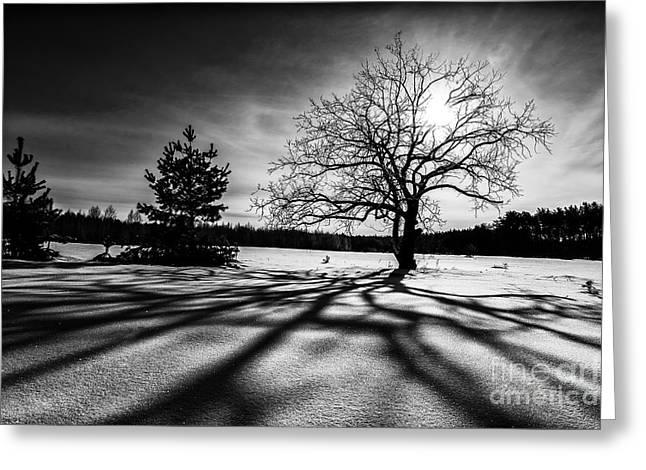 Igor Baranov Greeting Cards - Winter sunrise Greeting Card by Igor Baranov