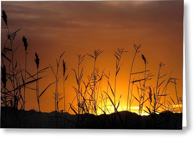 Winter Sunrise Greeting Card by Tammy Espino