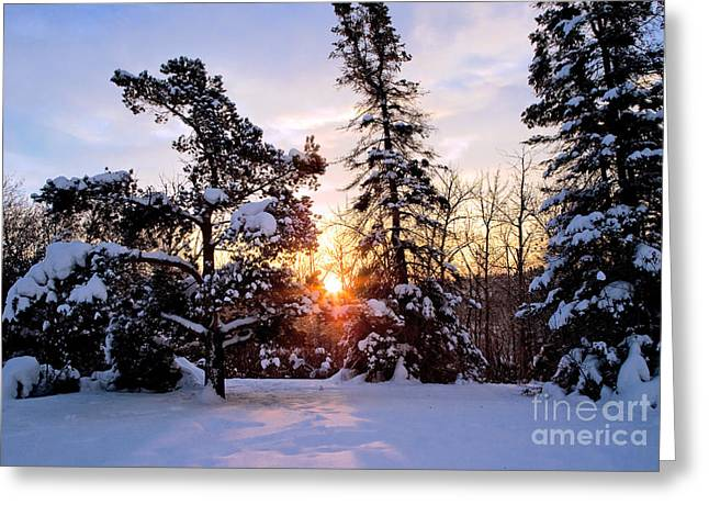 Trees In Winter Greeting Cards - Winter Sunrise Greeting Card by Terry Elniski
