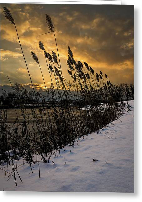 River Scenes Greeting Cards - Winter sunrise through the reeds Greeting Card by Chris Bordeleau