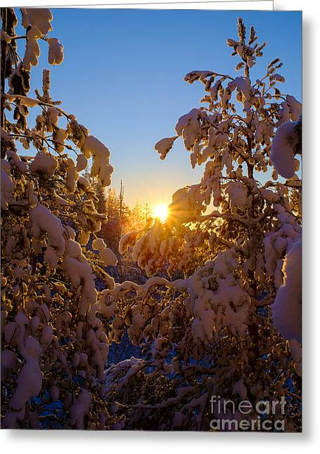 Snowy Evening Greeting Cards - Winter Sunset Behind the Trees Greeting Card by Ismo Raisanen