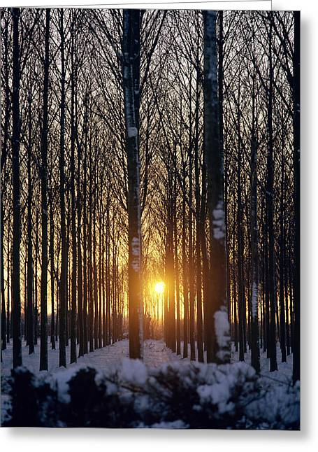 The Trees Greeting Cards - Winter Sunset Through the Trees Greeting Card by Robert Hallmann