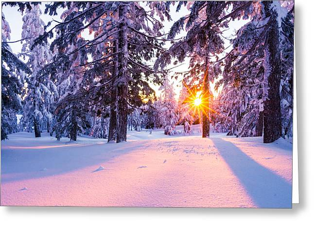 Winter Light Through The Trees Greeting Cards - Winter Sunset Through Trees Greeting Card by Priya Ghose
