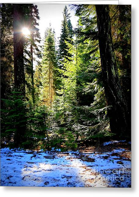 Snowy Day Greeting Cards - Winter Sunshine on Chinook Pass Greeting Card by Carol Groenen