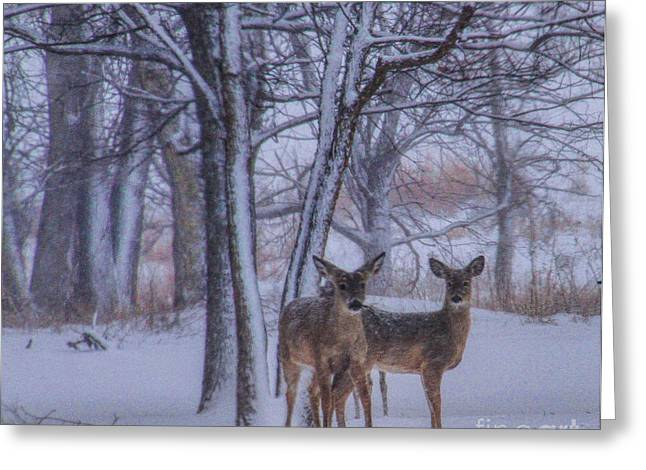 Chalco Hills Recreation Area Greeting Cards - Winter Survival Greeting Card by Elizabeth Winter