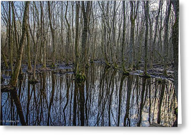 Winter Swamp Greeting Card by Brian Wallace