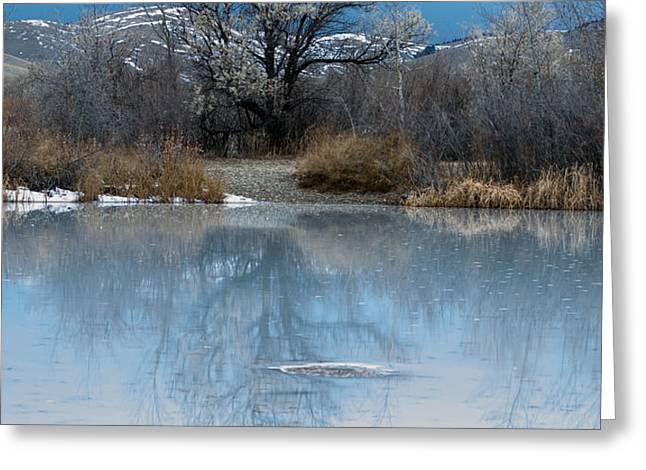 Winter Taking Hold Greeting Card by Fran Riley