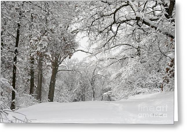 Www Greeting Cards Greeting Cards - Winter Trail Greeting Card by E B Schmidt