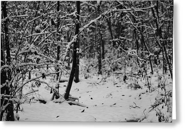 Trees In Winter Greeting Cards - Winter Trailhead Greeting Card by Dan Sproul