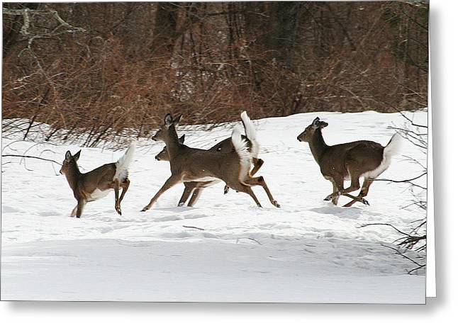 Neal Eslinger Photography Greeting Cards - White Tailed Deer Winter Travel Greeting Card by Neal  Eslinger