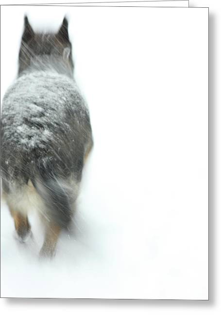 Dog In Snow Greeting Cards - Winter Traveler Greeting Card by Karol  Livote
