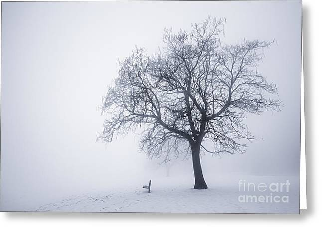 Bare Trees Greeting Cards - Winter tree and bench in fog Greeting Card by Elena Elisseeva