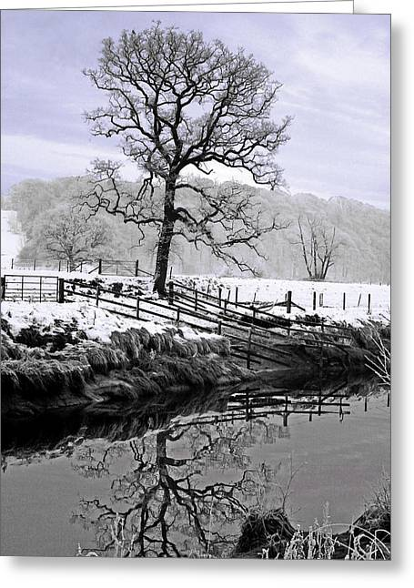 Winter Photos Mixed Media Greeting Cards - Winter Tree Greeting Card by Andy Armfield