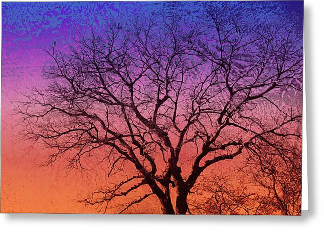 Manipulated Photography Greeting Cards - Winter Tree Greeting Card by Ann Powell