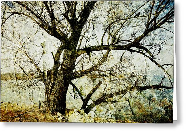 Manipulated Photography Greeting Cards - Winter Tree At The  Lake Shore  Greeting Card by Ann Powell
