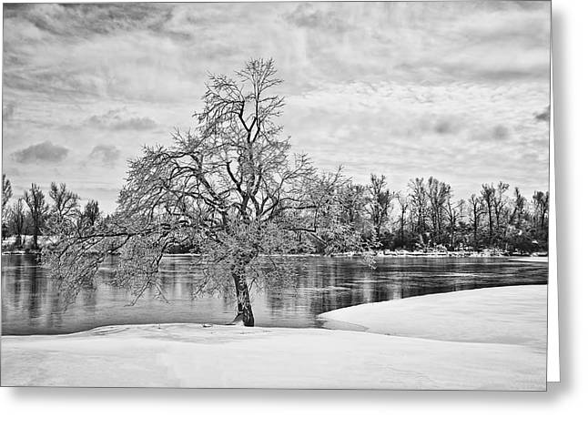 Snow-covered Landscape Digital Art Greeting Cards - Winter Tree at the Park  b/w Greeting Card by Greg Jackson