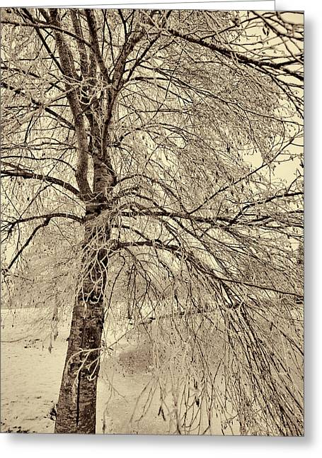 Winter Images Greeting Cards - Winter Tree Greeting Card by Bonnie Bruno
