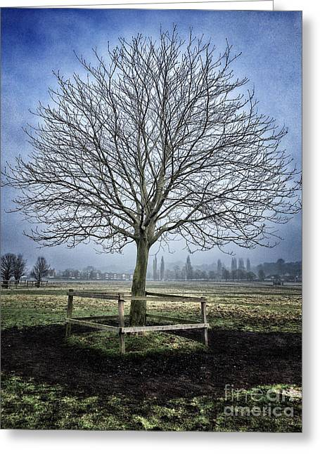 Bare Trees Greeting Cards - Winter Tree Greeting Card by Colin and Linda McKie