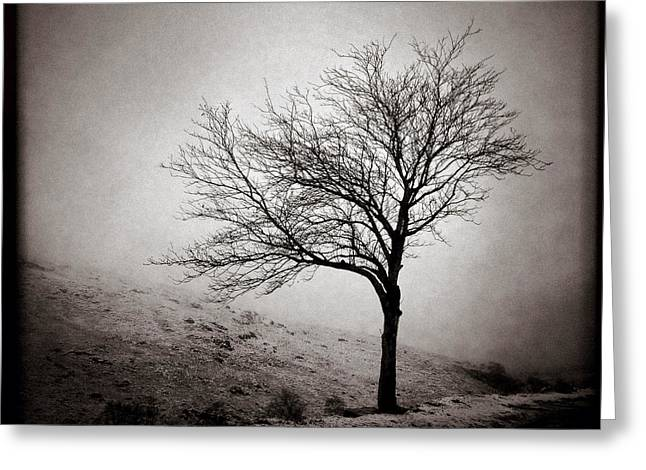 Bare Tree Photographs Greeting Cards - Winter Tree Greeting Card by Dave Bowman