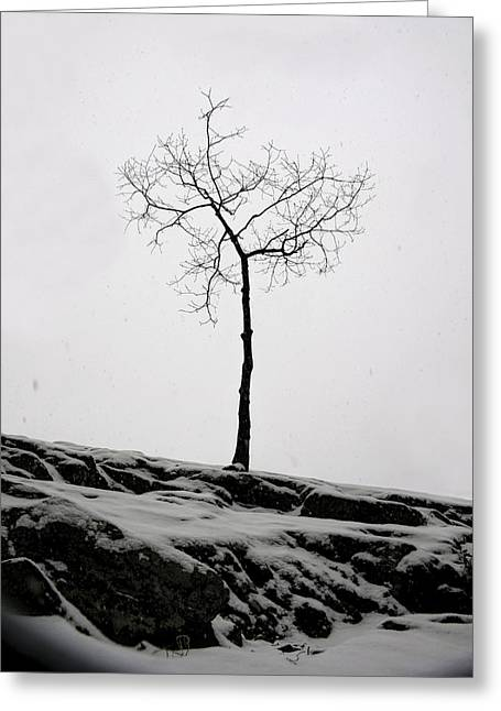 Christmas Greeting Greeting Cards - Winter Tree on Billy Goat Trail Greeting Card by Francis Sullivan