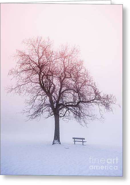 Park Benches Photographs Greeting Cards - Winter tree in fog at sunrise Greeting Card by Elena Elisseeva