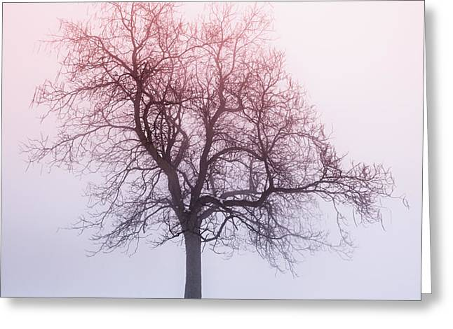 Winter tree in fog at sunrise Greeting Card by Elena Elisseeva