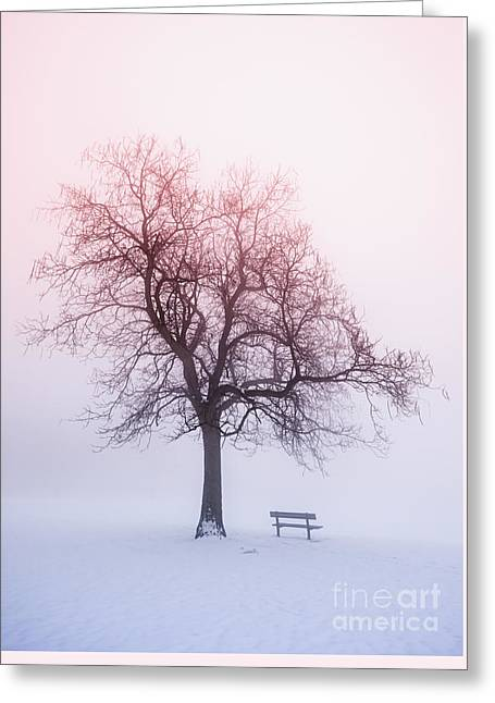 Nature Scene Greeting Cards - Winter tree in fog at sunrise Greeting Card by Elena Elisseeva