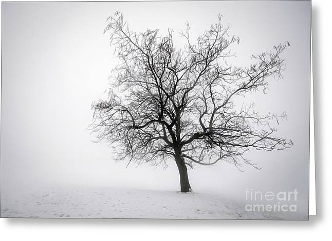 Bare Trees Greeting Cards - Winter tree in fog Greeting Card by Elena Elisseeva