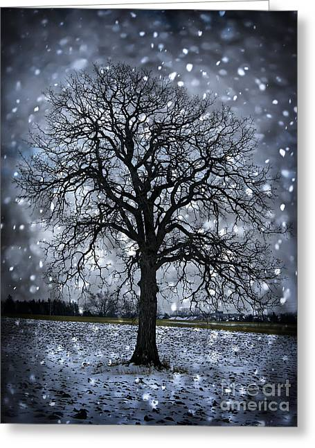 Snowy Field Greeting Cards - Winter tree in snowfall Greeting Card by Elena Elisseeva