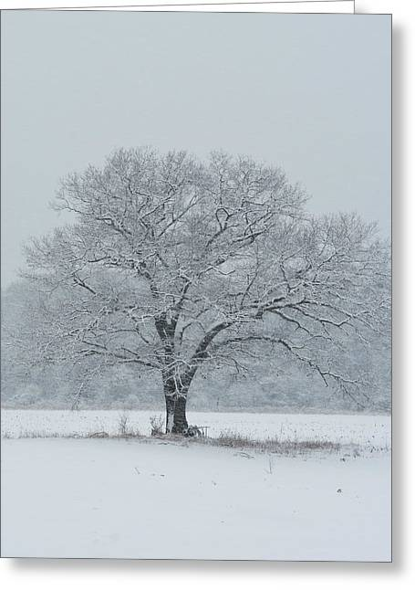 Snowstorm Digital Art Greeting Cards - Winter Tree Ipswich MA Greeting Card by Toby McGuire
