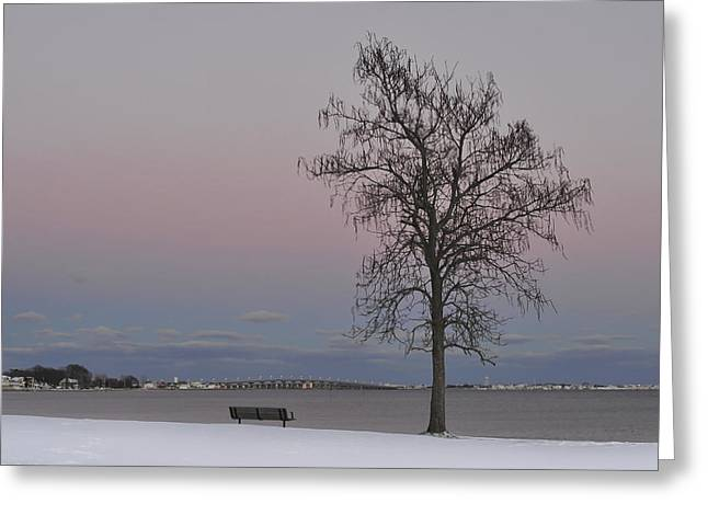 Kitchen Photographs Greeting Cards - Winter Tree Island Heights NJ Greeting Card by Terry DeLuco