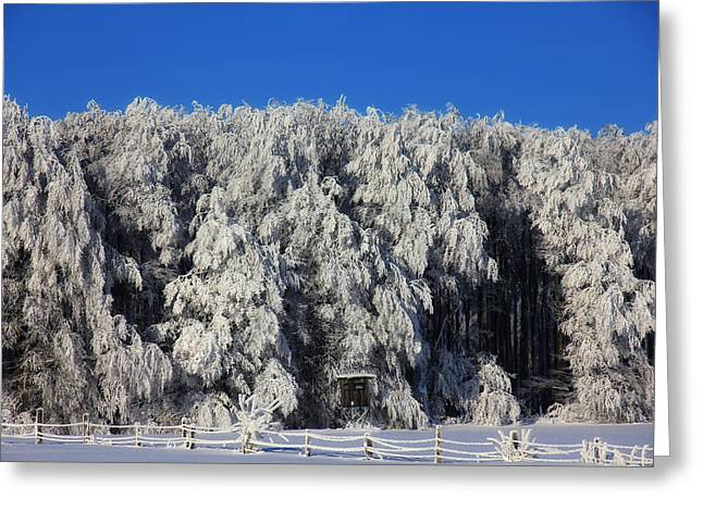 Snow-covered Landscape Greeting Cards - Winter Tree Line Greeting Card by Mountain Dreams
