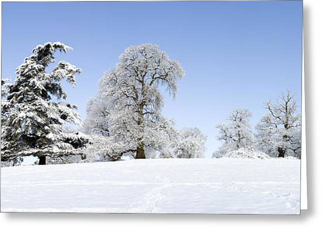 Winter Tree Line Greeting Card by Tim Gainey