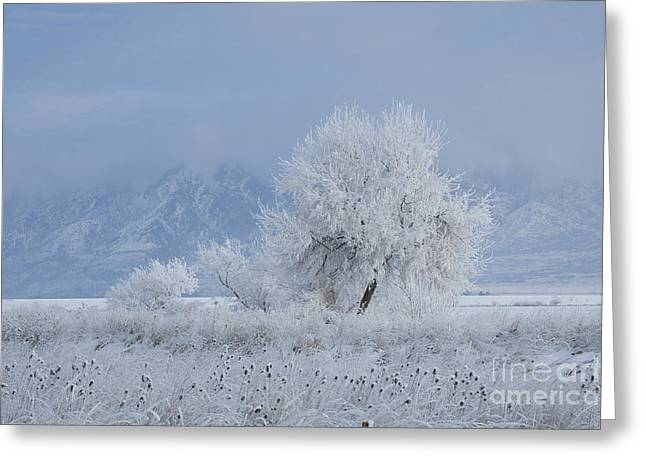 Lens Mixed Media Greeting Cards - Winter tree Greeting Card by Nicole Markmann Nelson