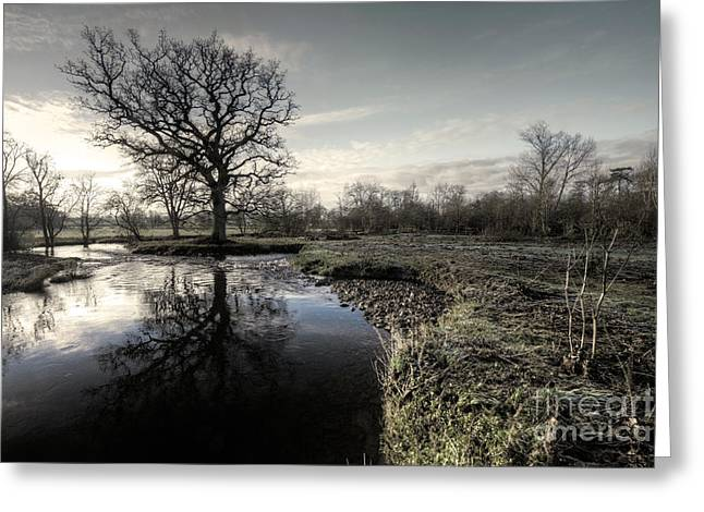 Culm Greeting Cards - Winter tree on the River Culm Greeting Card by Rob Hawkins